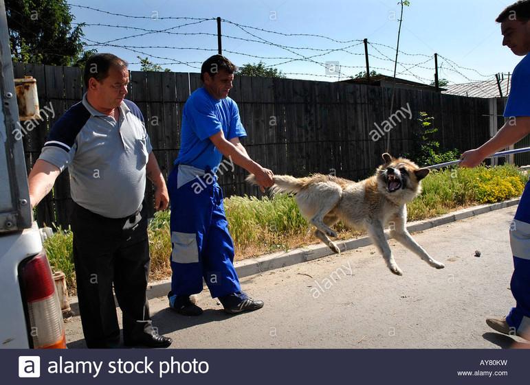 dog-catchers-in-bucharest-romanias-capit