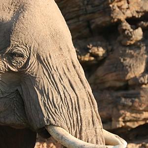 DESERT ELEPHANTS OF NAMIBIA