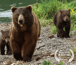 Kamchatka Bears, Life Begins