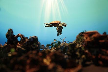 A tartaruga de plástico (La tortuga de plastico)
