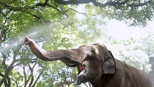 Mara, el viaje de la elefanta