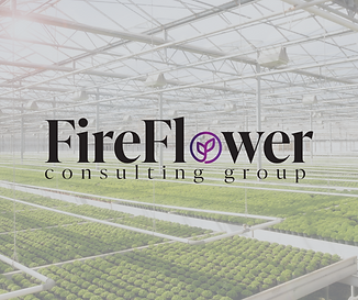 fireflower consulting group colorado