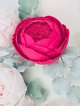 close up bright pink rose2 - 1.jpg