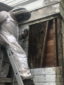 Man where bee keeping protective suite standinding next to bee hive in wall