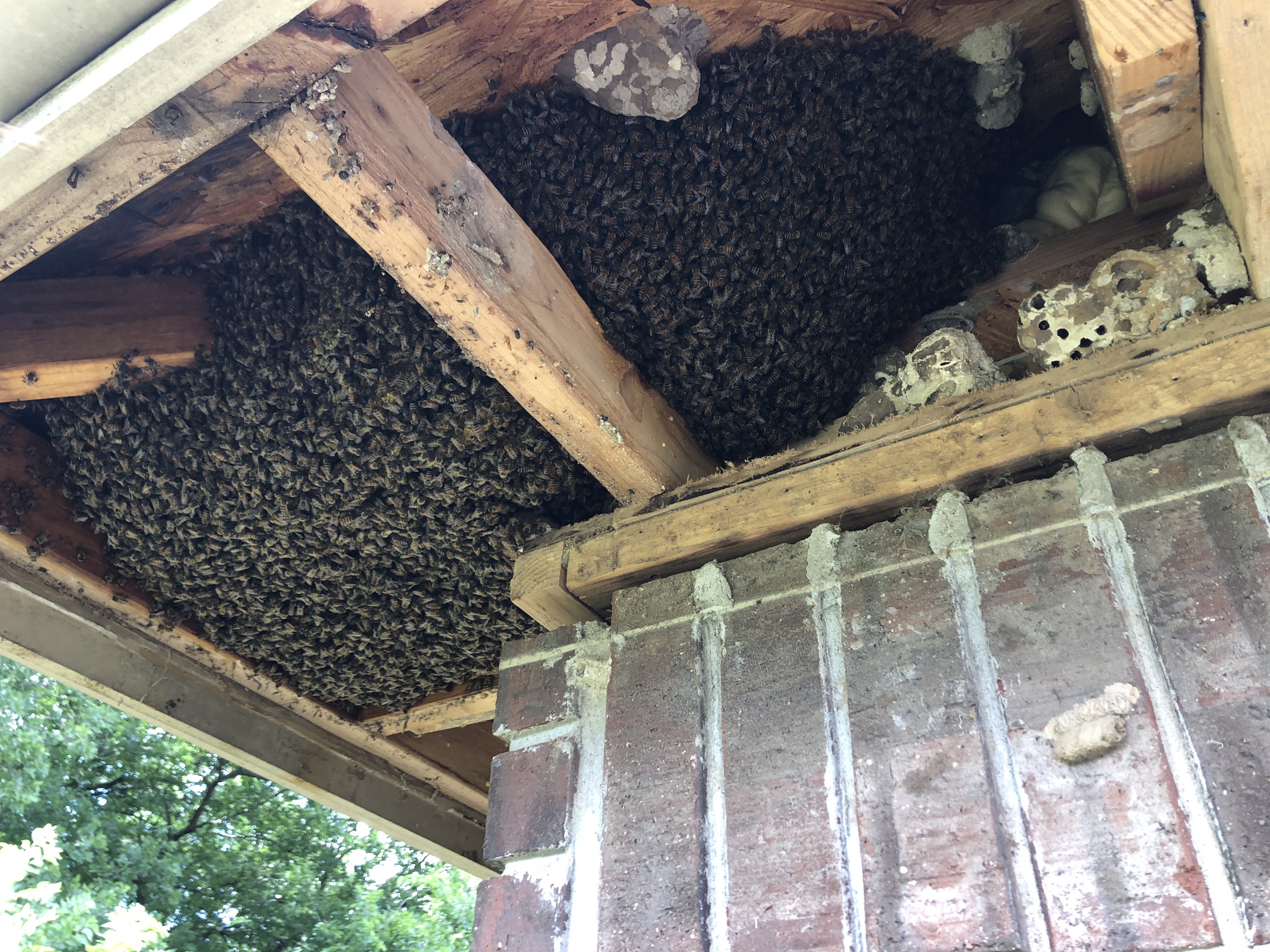 large bee hive in the soffit of a residential home