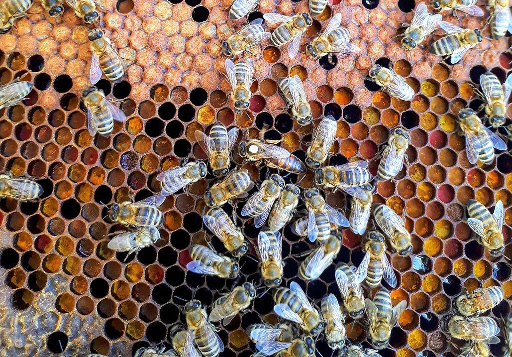 queen_bee_hive.jpg