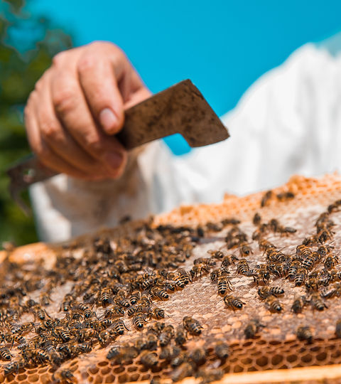 honey-bees-wooden-bee-hive-high-quality-