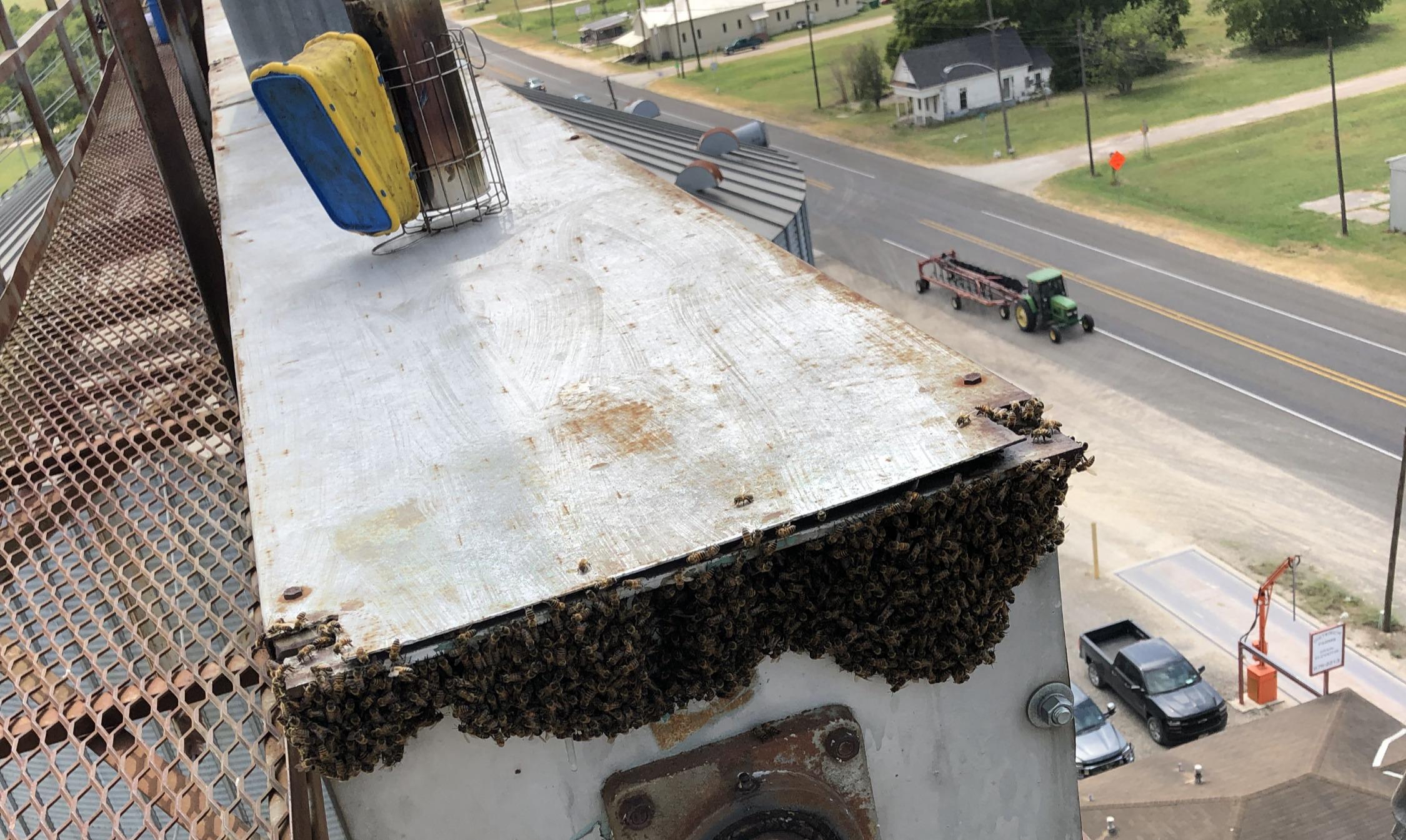 Bee hive high up on a grain elevator near waco texas