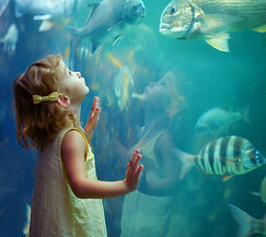 little girl looking into giant tank of fish