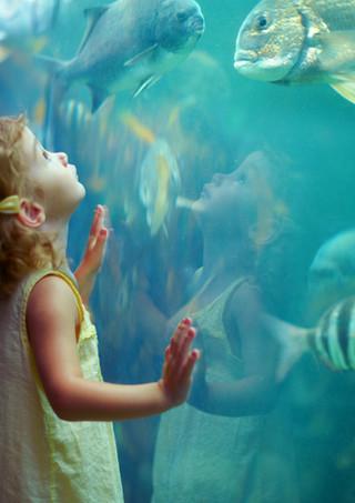 Mädchen am Aquarium