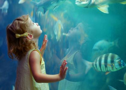 【動画】マックを食べて、ニュージーランドの水族館Kelly Tarlton's