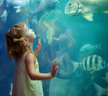 Young girl at aquarium, peering at fish