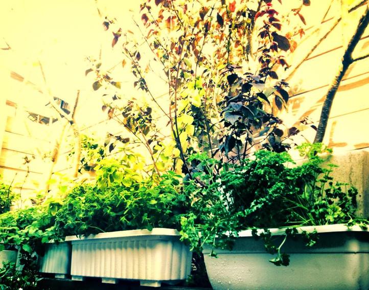 .COM Life | 陽台小花園 II