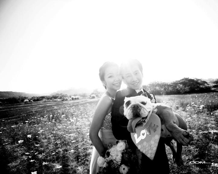 | Love Moment | 寵物婚紗  英鬥鐵匠來惹
