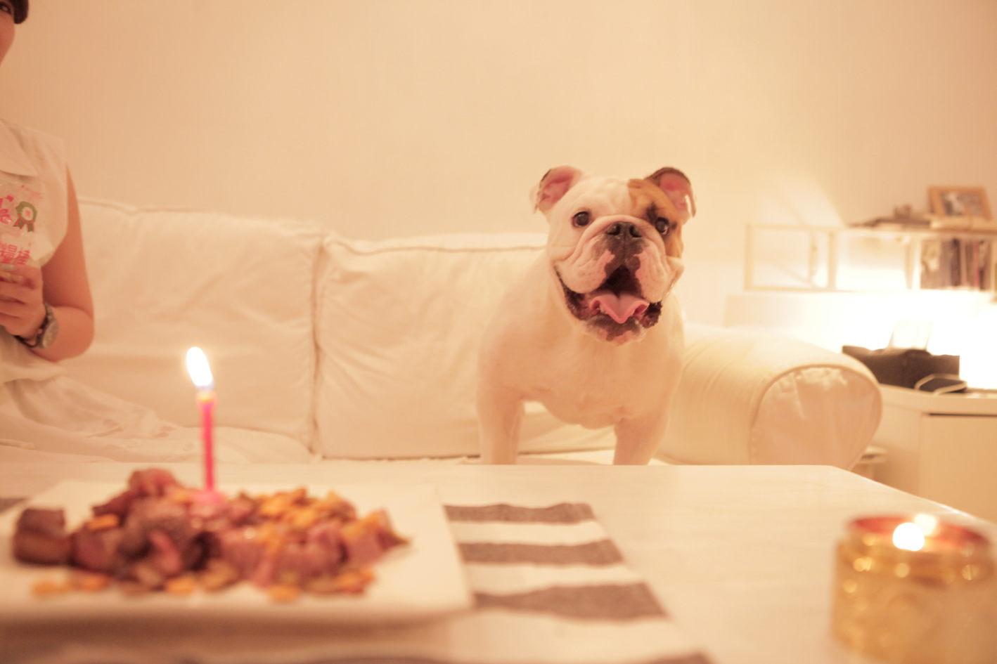 虎克 一歲生日快樂