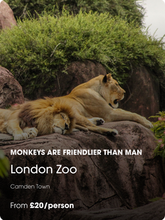 London Zoo@3x.png