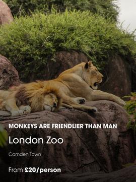 London Zoo@3x.png