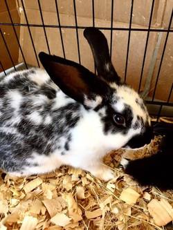 Texas Country Farm Supply - Rabbits