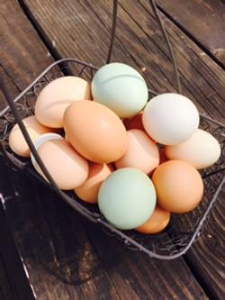 Freebirds Fresh Eggs