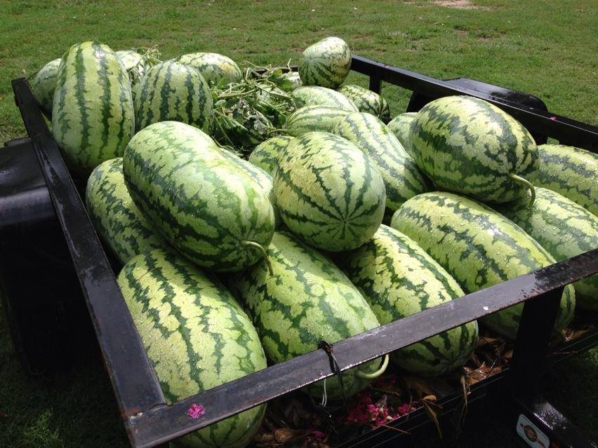 Mike Parnell's Watermelons