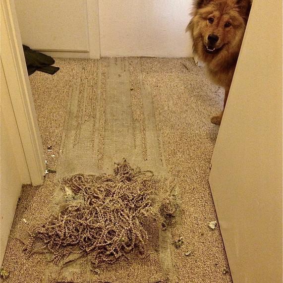 Dog Damage