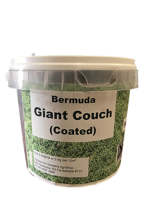 Seed - Bermuda Giant Couch