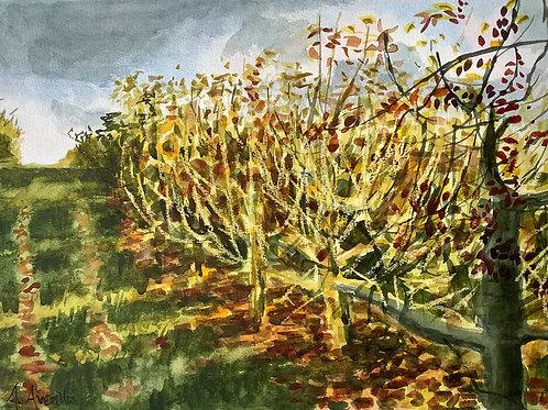 'Autumn Orchard' watercolour