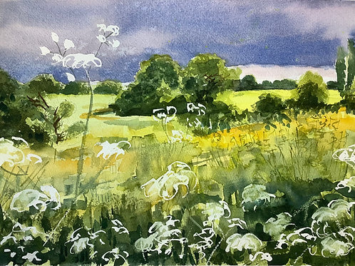 'Oilseed and Cowparsley' watercolour