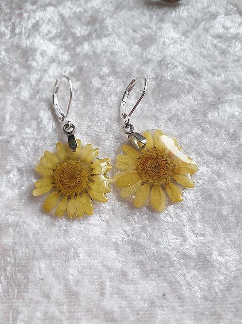 Boucles d'oreilles argent et fleurs séchées