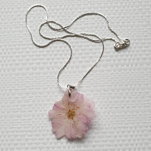 Collier fleur cerisier du Japon naturelle et chaine argent