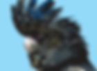 black cocky.png