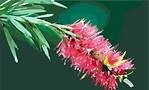 bottle brush.png