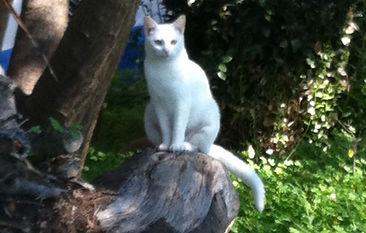 Chat blanc assis sur un tronc