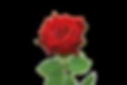 Ruusu.png