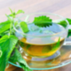 Nettle-Tea-Images.jpg