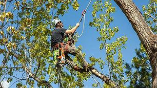 arborist-picture-e1479503315634.jpg