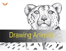 DRAWING ANIMALS.jpg