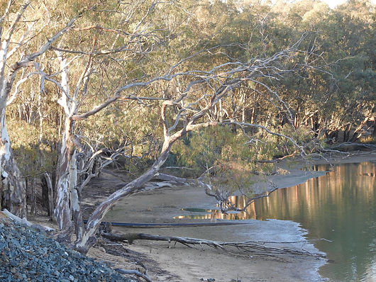 Murray River - Five Mile Bend