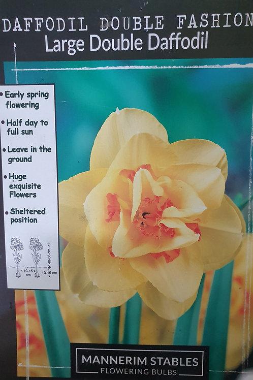 Double Daffodil - Double Fashion