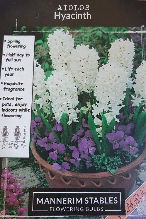 Hyacinth Aiolis