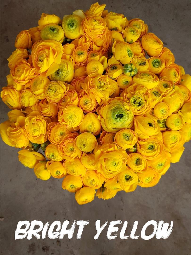 bright yellow.jpg