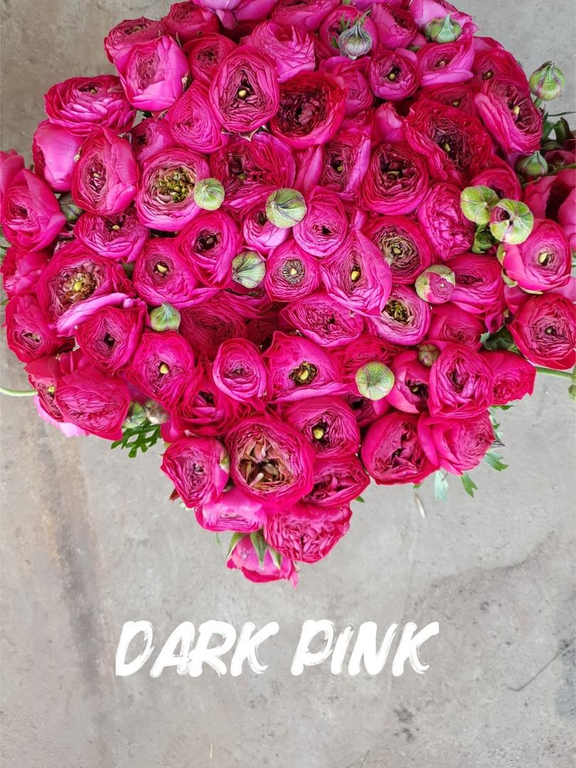 dark pink.jpg