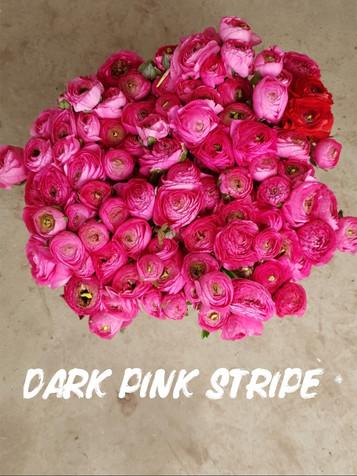 dark pink stripe.jpg