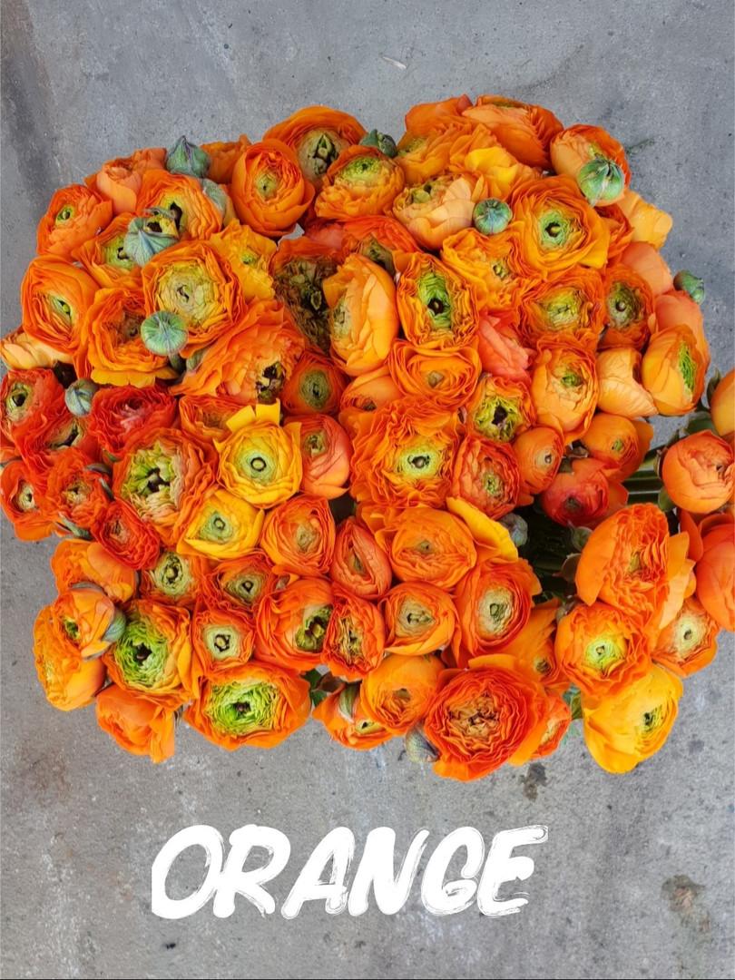 orange .jpg
