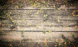 Fleurs sur bois 2015-10-19-19:42:32