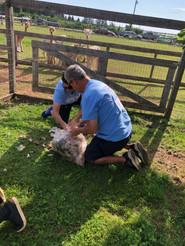 Green Gables Alpaca Farm_5785.jpeg