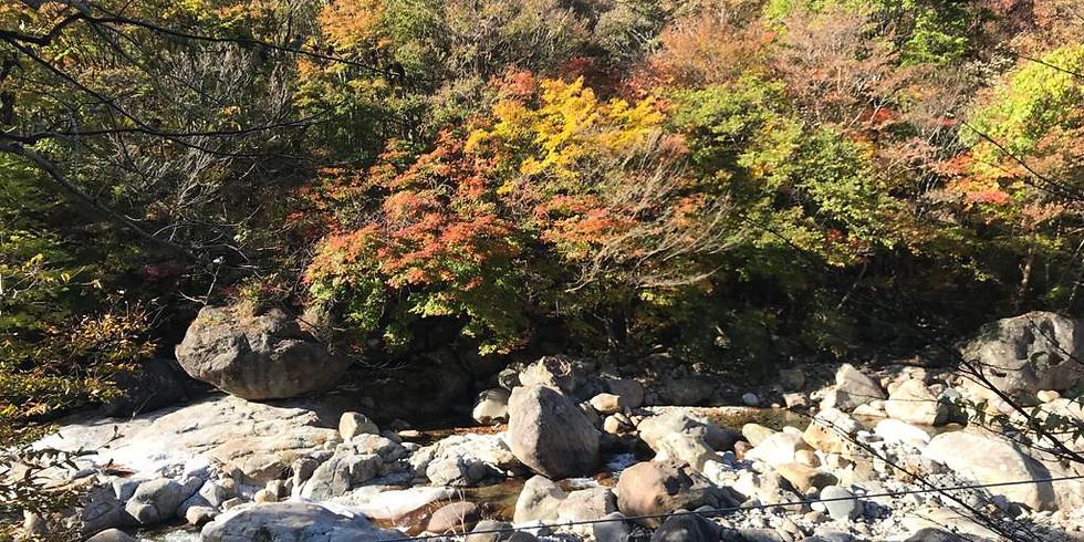 WALKIE TALKIE HIKE, WED 11 Nov Seoul Trail Section 1, 9:45