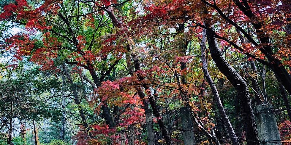 WALKIE TALKIE HIKE, Wed 28 October, 2020, Mt Gwanaksan, Seoul Trail Section 5 part 2