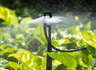 water sprinkler .jpg