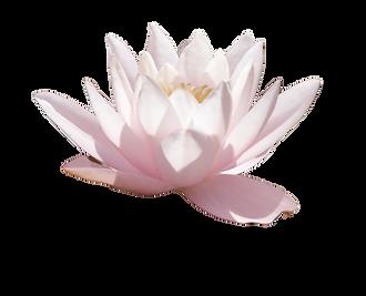lotus4.png